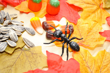 Fall Ant Looking for Food