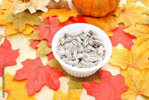 Fall Sunflower Seeds