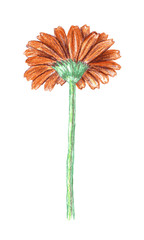 Colour pencils illustration.
