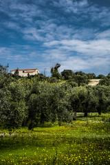 una chiesa oltre gli olivi