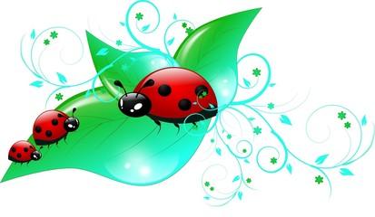 Three ladybugs on leaves