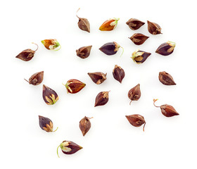 Buckwheat groats. Seeds isolated on white