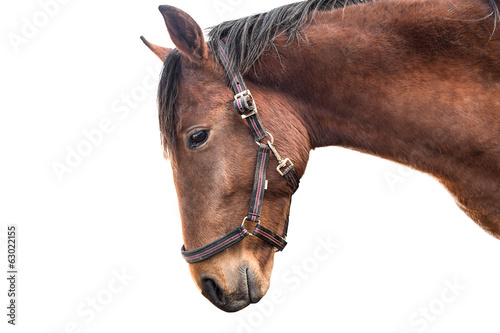 Horse's head isolated on white
