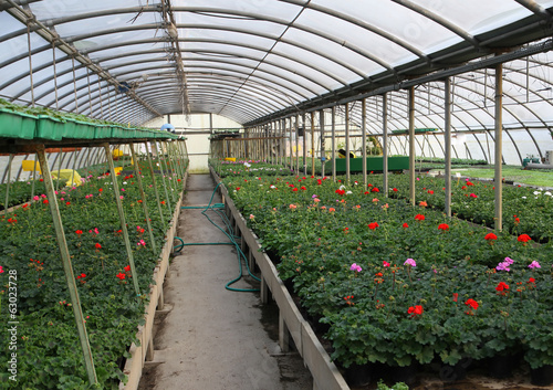 Flowering plants in spring in the greenhouse nursery sales