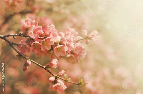 Naklejka Vintage flowers