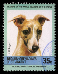 Stamp printed in Bequia shows Whippet dog, circa 1985