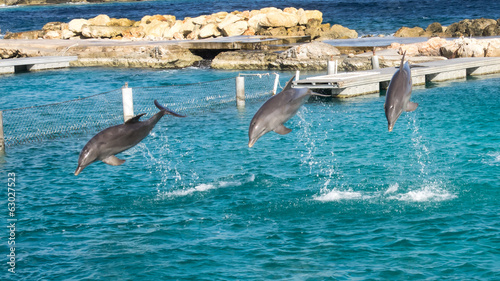 Dolphins jumping and spinning in the Caribbean Ocean