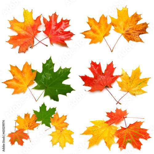 Collection of autumn leaf