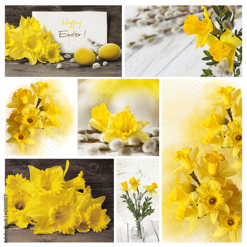 Collection of spring narcissus