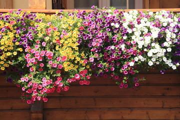 balconi fioriti addobbi tipici del trentino alto adige