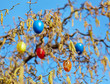 Colored easter Eggs in hazelnut bush