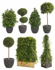 Deko Pflanzen XXL-Set