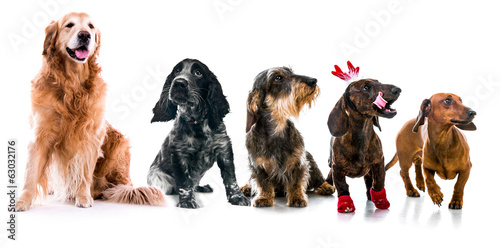 Set photos of dogs  different breeds isolated