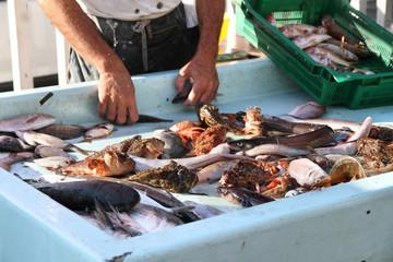 Mercato del pesce Vieux Port Marsiglia