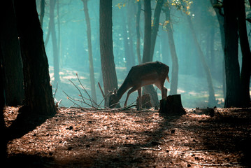 young deer posing in the forest