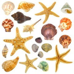 Large Assortment of sea shells individually isolated on white
