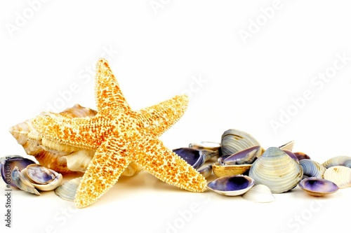 Star fish and sea shells in a group over a white background