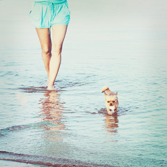 Woman legs and chihuahua dog in sea water.
