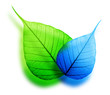 Macro green and blue leaf abstract eco background