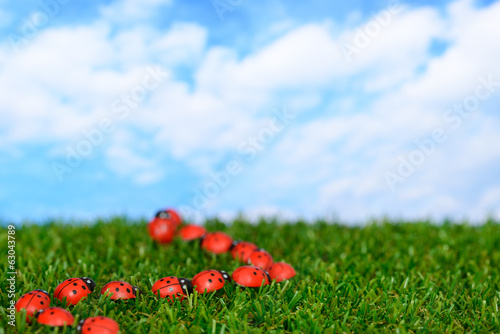 Ladybugs on green field