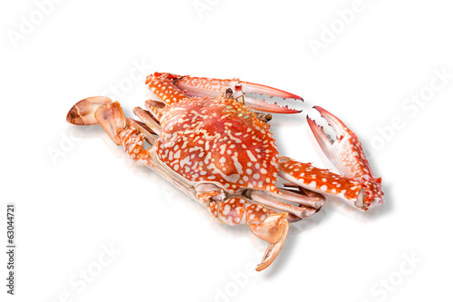 Steamed crab isolated on white