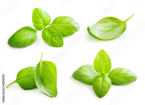 Basil leaves spice closeup isolated on white background. - 63045191