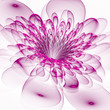Beautiful purple flower on white background. Computer generated