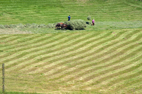 Peasant Loading Mowed Hay Onto The Cart, Serbia