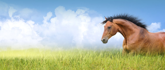 red horse in high summer grass against  sky, banner