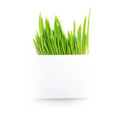 Paper sheet over fresh green grass on white
