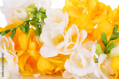 Beautiful freesia flowers, close up