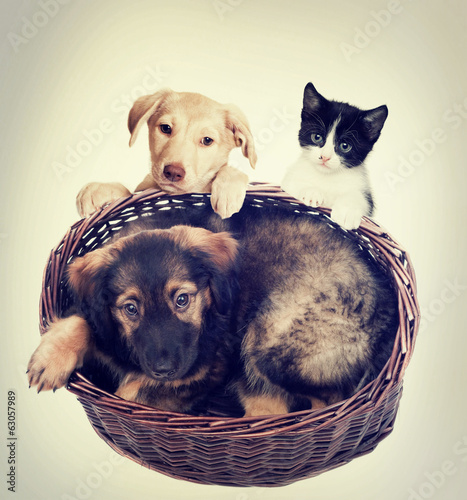 puppy in a basket and kitten