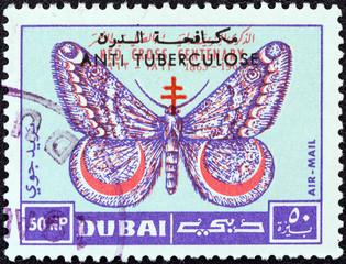 March moth (Dubai 1963)