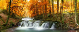 forest waterfall - 63059760