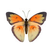 canvas print picture - tropical butterfly on white background