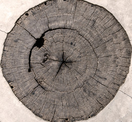 tree stumps and felled forest deforestation