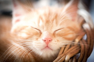 closeup face of a sleeping kitten - shallow d.o.f.