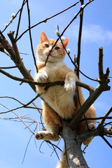 Ginger cat sitting on a willow. Spring.