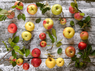 Organic various  Apples with leaves on wooden background