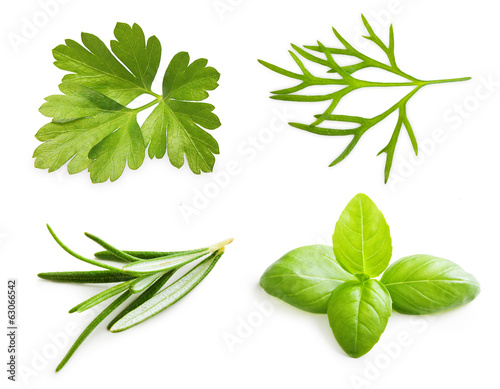 Parsley herb, basil leaves, dill, rosemary spice isolated on