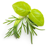 Basil leaves, dill herb, rosemary spice isolated on white