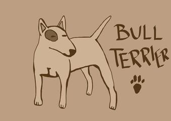 bull terrier vintage