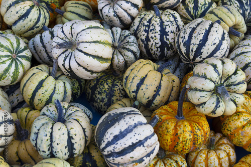 Background made ​​of colorful gourds