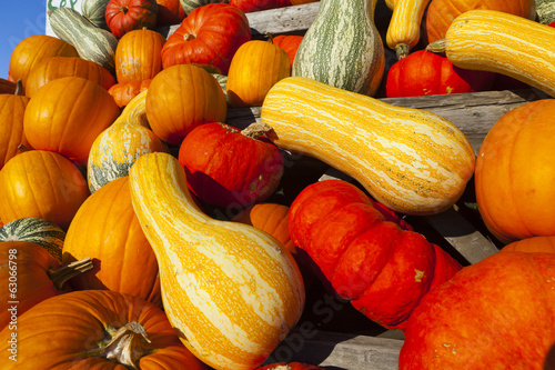Many different ornamental gourds