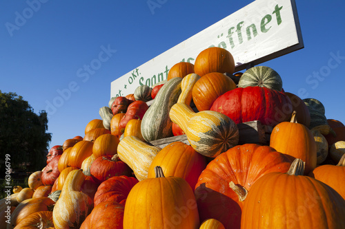 Many pumpkins for sale