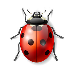 Ladybird vector illustration, ladybug vector icon
