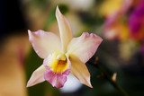 Exotic flower - orchid