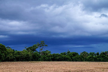 Rain Coming in the Fields 3