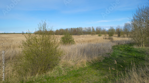 Field with reed under a clear sky in spring