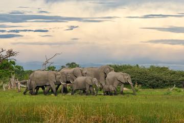 Elefantenherde vor Abendhimmel